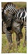 Zebra Hug Beach Towel