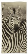 Zebra Trio Beach Towel