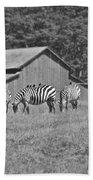 Zebras In San Simeon Beach Towel