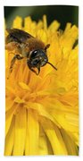 A Bee In A Dandelion Beach Towel