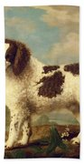 Brown And White Norfolk Or Water Spaniel Beach Towel by George Stubbs