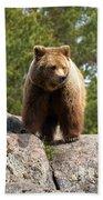 Brown Bear 4 Beach Towel
