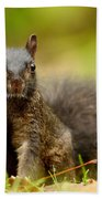 Curious Black Squirrel Beach Towel by Mircea Costina Photography
