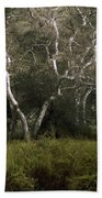 Dv Creek Trees Beach Towel