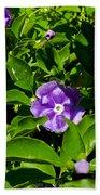 Purple Flowers In Pilgrim Place In Claremont-california Beach Towel