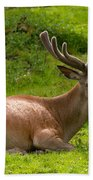 Red Deer Beach Towel