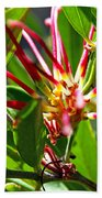 Red Spider Flower Close Up Beach Towel