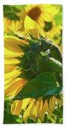Sunflower 7249a Beach Towel