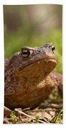 The Common Toad 3 Beach Towel