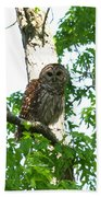 0298-001 - Barred Owl Beach Towel