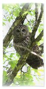 0304-002 - Barred Owl Beach Towel