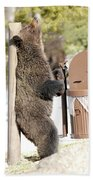 060510-grizzly Back Scratch Beach Towel
