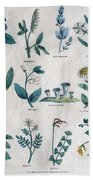 Lithography Of Common Flowers  Beach Towel