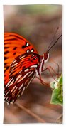 4534 - Butterfly Beach Towel