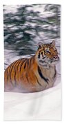 A Blur Of Tiger Beach Towel