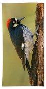 Acorn Woodpecker Beach Towel