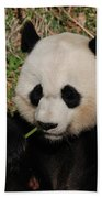 Adorable Giant Panda Eating A Green Shoot Of Bamboo Beach Towel