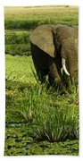 African Elephant In Swamp Beach Towel