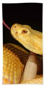 Albino Brazilian Rattlesnake Beach Towel