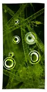 Algae Spirogyra Sp., Lm Beach Towel