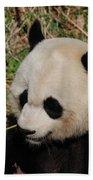 Amazing Panda Bear Holding On To Shoots Of Bamboo Beach Towel