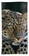 Amur Leopard #2 Beach Towel
