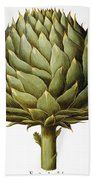 Artichoke, 1613 Beach Sheet