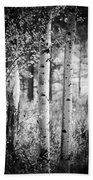 Aspen Trees In Black And White Beach Towel