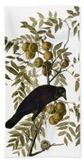 Audubon: Crow Beach Towel