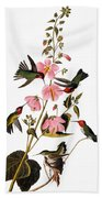 Audubon: Hummingbird Beach Towel