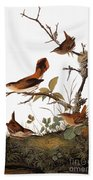 Audubon: Wren Beach Towel