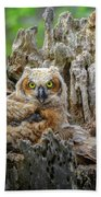 Baby Great Horned Owl Beach Towel