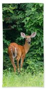 Backyard Deer Beach Towel