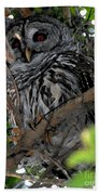 Barred Owl  Beach Towel