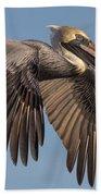 Beautiful Brown Pelican Beach Towel