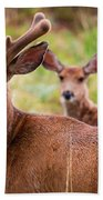 Beautiful Mule Deer Herd Beach Towel