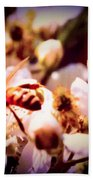 Bee On Apple Blossoms Beach Towel