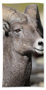 Bighorn Ram Beach Towel