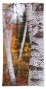 Birch Trees Fall Scenery Beach Towel