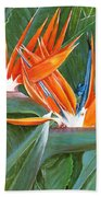 Birds Of Paradise Beach Towel
