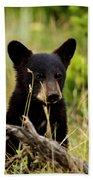 Black Bear Cub Beach Towel