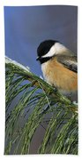 Black-capped Chickadee Beach Towel by Tony Beck