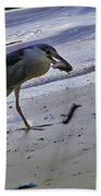 Black Crowned Night Heron Beach Towel