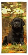 Black Labrador Retriever Puppy Beach Towel