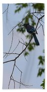 Blue Jay In Tree Beach Towel
