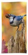 Blue Jay With Acorn Beach Towel