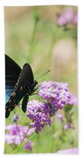 Blue Swallowtail Butterfly  Beach Towel