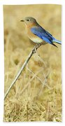Bluebird In February Beach Towel