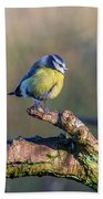 Bluetit On A Branch Beach Towel