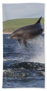 Bottlenose Dolphin - Scotland  #14 Beach Towel